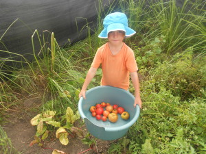 Josh with his tomato harvest