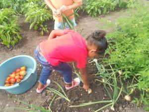 Farbin harvesting onions at Ikhaya Labantwana