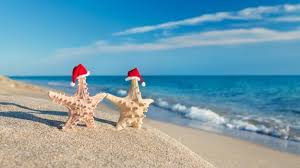 starfish with santa hats on the beach